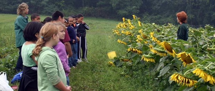 Picture of students and sunflowers